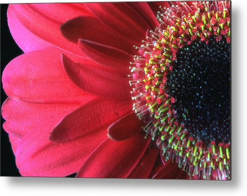 Red Metal Print featuring the photograph Red Sun by Gina Cormier