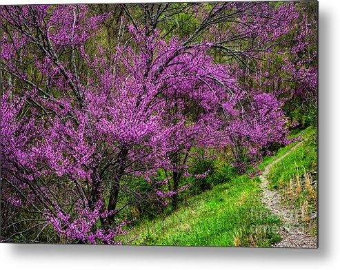 Spring Metal Print featuring the photograph Redbud And Path by Thomas R Fletcher