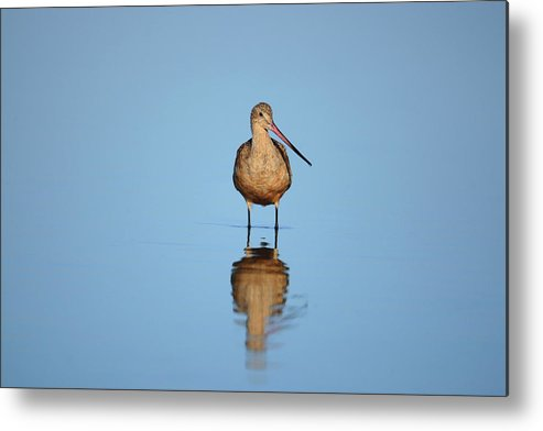 Bird Metal Print featuring the photograph Reflecting Time by Alex Troya