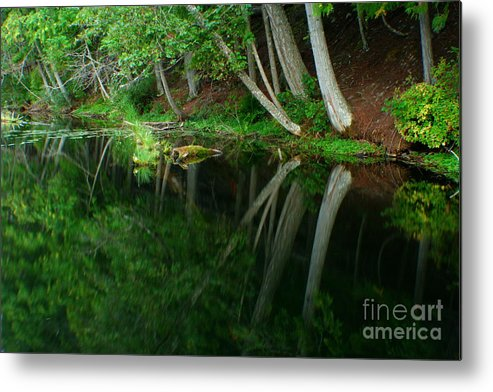 Forest Metal Print featuring the photograph Reflections Of A Forest by Idaho Scenic Images Linda Lantzy