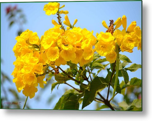 Loving Yellow Metal Print featuring the photograph Refreshing Yellows by Sonali Gangane