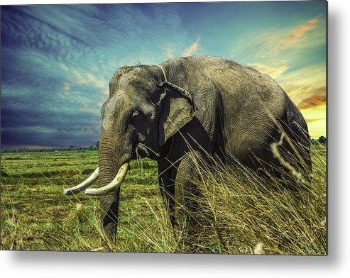 Safari Metal Print featuring the photograph Remember Elephant by Rasmus Sorensen