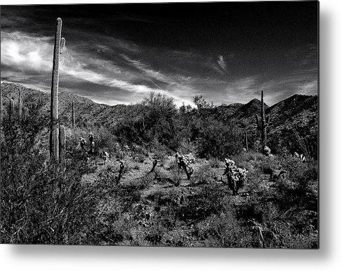 Arizona Desert Metal Print featuring the photograph Reymert Rolls by John Gee