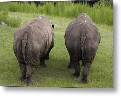 Rhino Metal Print featuring the photograph Rhino Rears by Kristin Smith