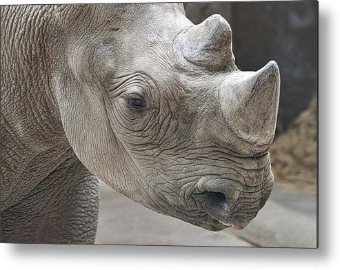 Rhinoceros Metal Print featuring the photograph Rhinoceros by Tom Mc Nemar