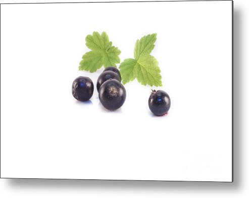 Black Metal Print featuring the photograph Ribes Nigrum Isolated by D R