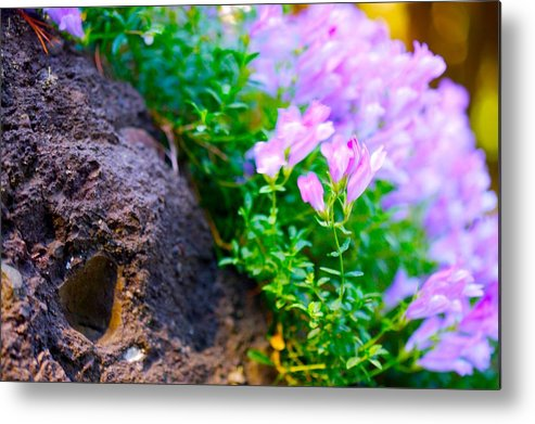 Floral Metal Print featuring the photograph Rock And Flowers by Paul Kloschinsky