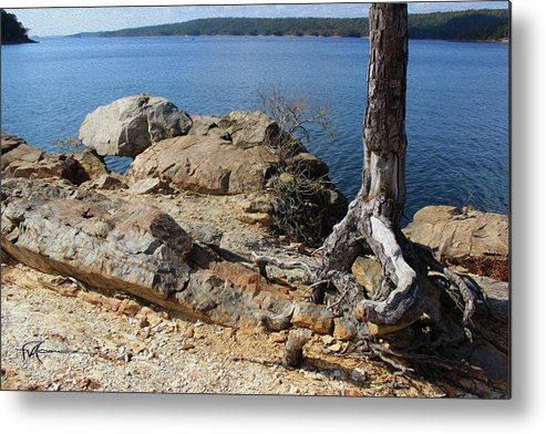 Outdoor Images Metal Print featuring the photograph Rock And Root by Felipe Gomez