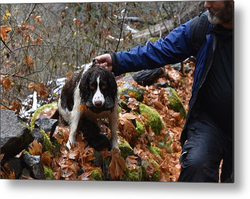 Dogs Metal Print featuring the photograph Rock Hound by Thomas Sexton
