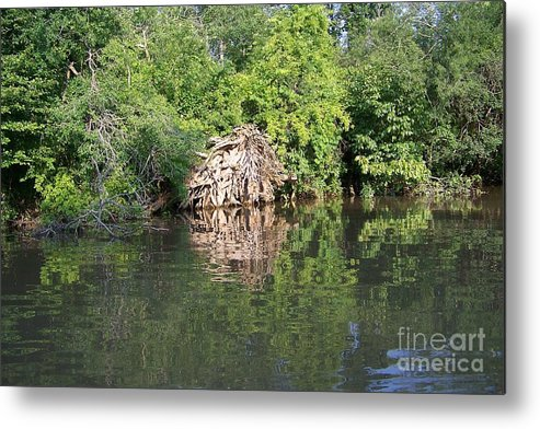 Tree Roots Metal Print featuring the photograph Roots In The Stream by Deborah MacQuarrie-Selib