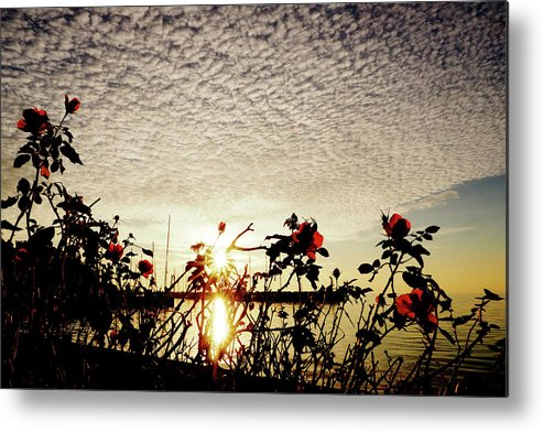 Seascape Metal Print featuring the photograph Roses At Sea by Aaron Fait