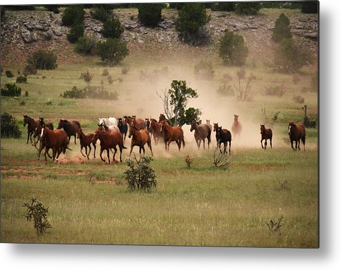 New Horse Pictures Metal Print featuring the photograph Running Herd by Fay Geddes