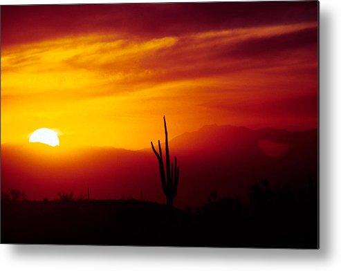 Arizona Metal Print featuring the photograph Saguaro Sunset by Randy Oberg