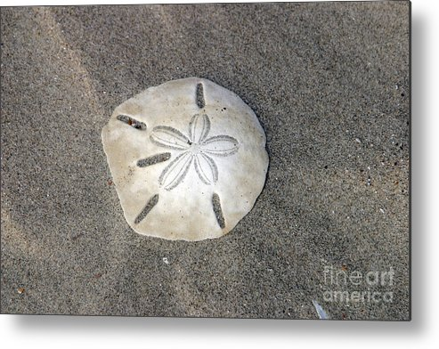 Sea Side Metal Print featuring the photograph Sand Dollar 1 by Janice Keener