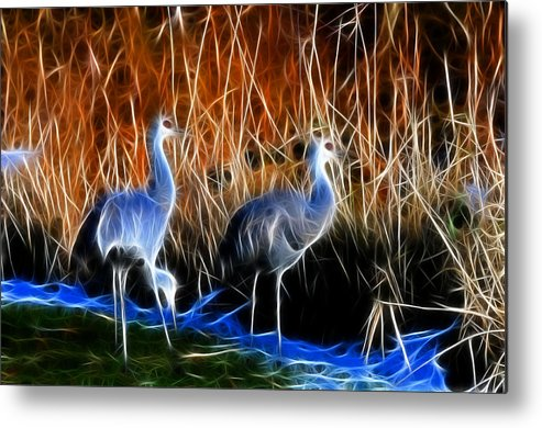 Snadhill Cranes Fractal At George C. Relfel Refuge Metal Print featuring the photograph Sandhill Cranes Pair Fractal by Lawrence Christopher
