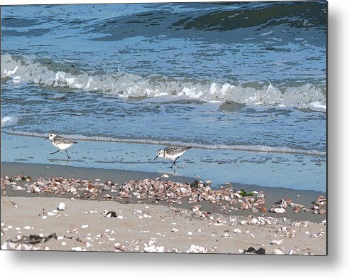 Sandpipers Metal Print featuring the photograph Sandpipers And Seashells - Poster by Margie Avellino