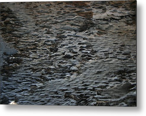 Scales Metal Print featuring the photograph Scaley Log by Joshua Sunday