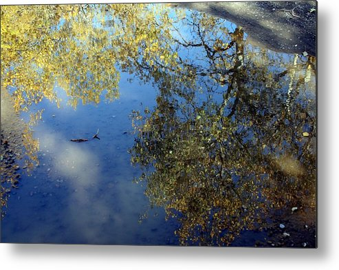 Reflections Metal Print featuring the photograph Scenes From A Mud Puddle by Tiffany Vest