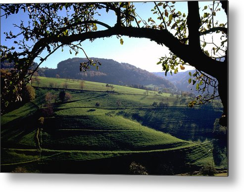 Schwarzwald Metal Print featuring the photograph Schwarzwald by Flavia Westerwelle
