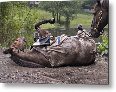 Horse Metal Print featuring the photograph Scratching The Itch by Jack Goldberg