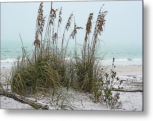 Luxury Metal Print featuring the photograph Sea Oats In Light Fog by Gene Norris