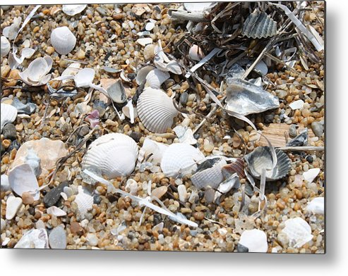 Beach Metal Print featuring the photograph Sea Ribbons And Shells by Marcie Daniels
