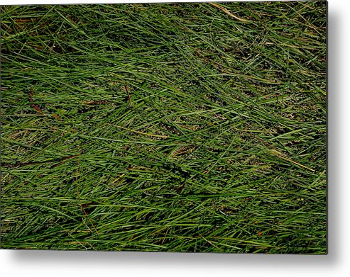 Seagrass Metal Print featuring the photograph Seagrass by Rebecca Fulweiler