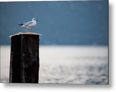 Italy Metal Print featuring the photograph Seagull by Luigi Barbano BARBANO LLC