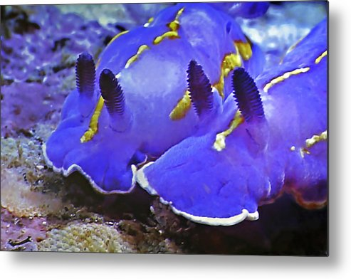 Ocean Metal Print featuring the photograph Sealife Underwater Snails by Christine Till