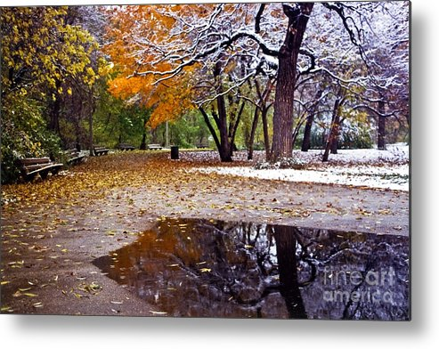Park Metal Print featuring the photograph Seasons Changing by Sven Brogren