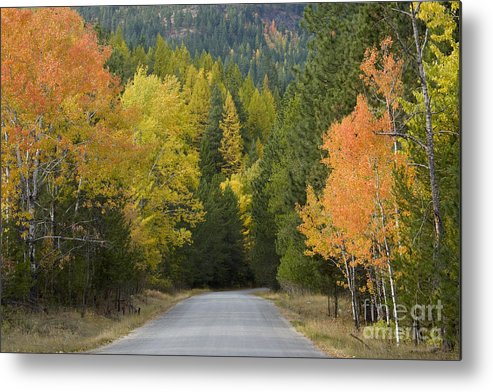 Trees Metal Print featuring the photograph Selkirk Color by Idaho Scenic Images Linda Lantzy
