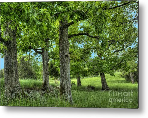 Peace Project Metal Print featuring the photograph Shade Trees by Pete Hellmann