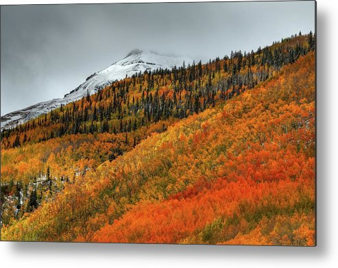 Aspen Trees Metal Print featuring the photograph Shades Of Autumn by Bill Sherrell