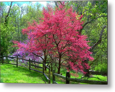 Spring Flowering Trees Metal Print featuring the photograph Shades Of Spring by Laurie Prentice