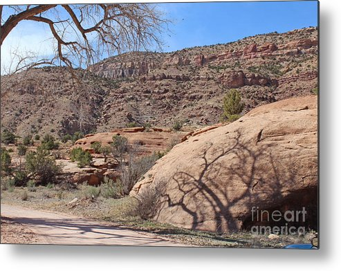 Country Metal Print featuring the photograph Shadow Tree Dominguez-escalante Canyon Colorado by Dale Jackson