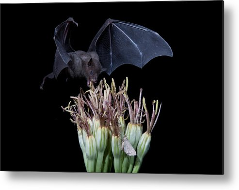 Nature Metal Print featuring the photograph Sharing With The Moth by E Mac MacKay