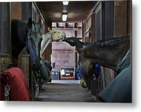Horse Metal Print featuring the photograph Shenanigans by Jack Goldberg