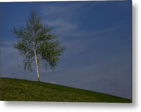 Betula Metal Print featuring the photograph Silver Birch Tree by TouTouke A Y
