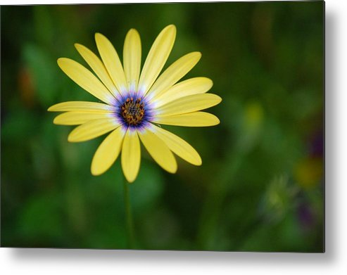 Flower Metal Print featuring the photograph Simple Flower by Jennifer Englehardt