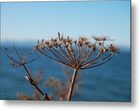 Dry Metal Print featuring the photograph Simple Nature by Jean Booth