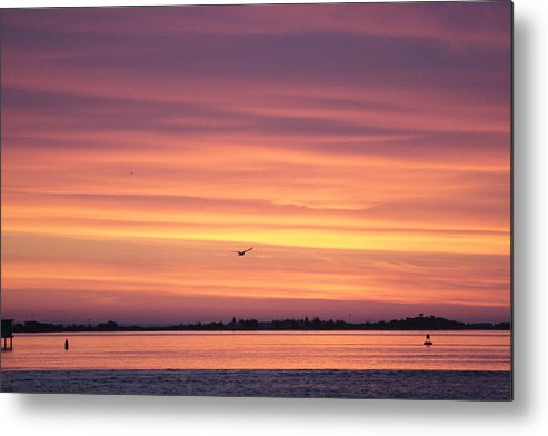 Seagulls Metal Print featuring the photograph Six Seagulls At Sunrise by Christopher Kirby