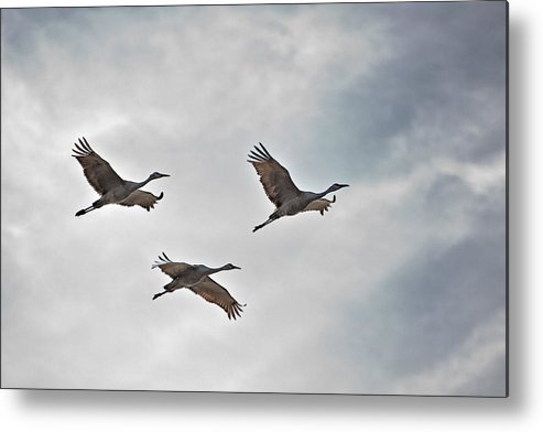 Nature Metal Print featuring the photograph Sky High Sandhills by Charlie Osborn
