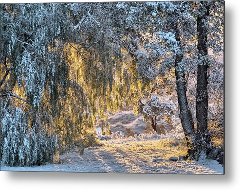Snow Metal Print featuring the photograph Snow At Sunrise 4 by Peter Dyke