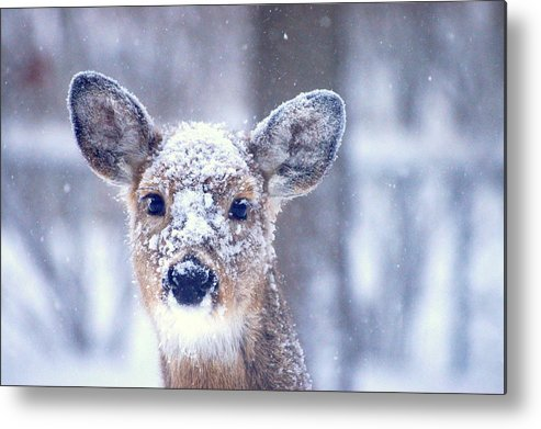 Atf Metal Print featuring the photograph Snow by Edward Loesch