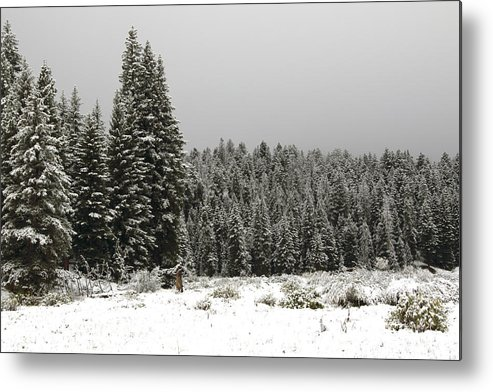 Snow Metal Print featuring the photograph Snow Trees by Michael Riley