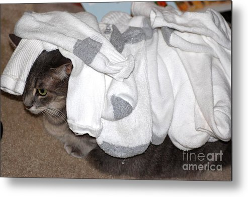 Socks Metal Print featuring the photograph Sock It To Me by Donna Bentley