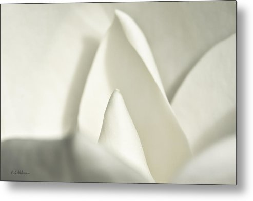 Magnolia Metal Print featuring the photograph Soft Magnolia by Christopher Holmes