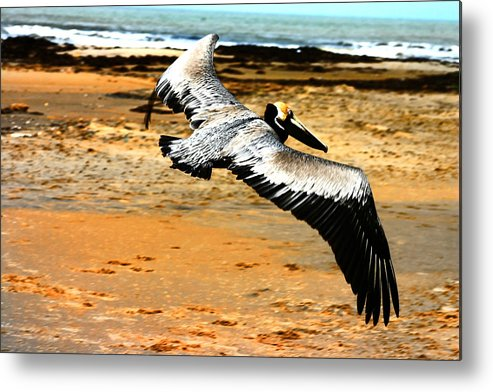 Brown Pelican Metal Print featuring the photograph South Padre Pelican by Laurie Prentice