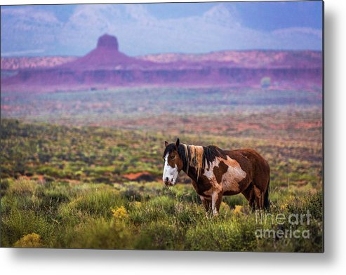Southwest Metal Print featuring the photograph Paint Horse by Anthony Michael Bonafede