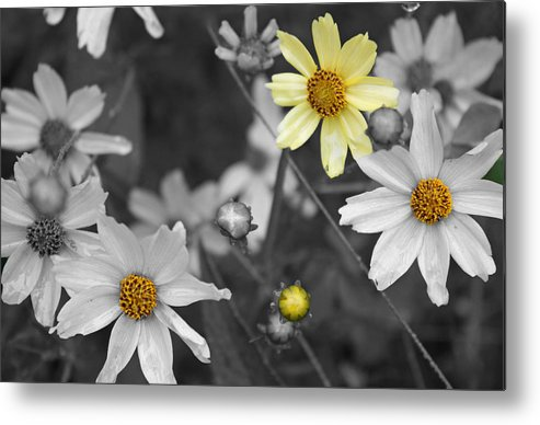 Flowers Metal Print featuring the photograph Splash Of Yellow by Becca Brann